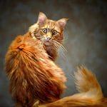Боязнь чужих людей - кошачья ксенофобия