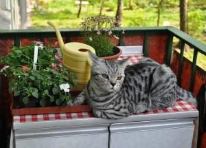 Что опасно для кошек в нашем доме