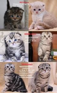 До того как выбирать котенка
