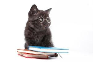 Интеллект кошки