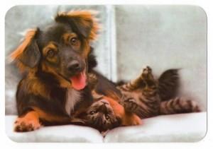 Как подружить котенка с кошкой или собакой