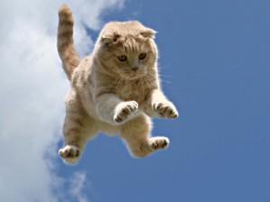 Кошка и ее девять жизней