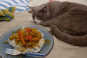 Кошка отказывается от еды