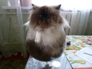 Котик в стакане