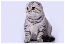 В каком возрасте заводить котенка