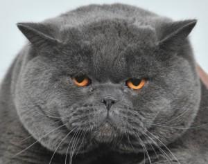 Чем лечить глисты у кошки