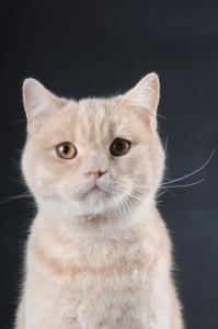 Когда можно кастрировать кота
