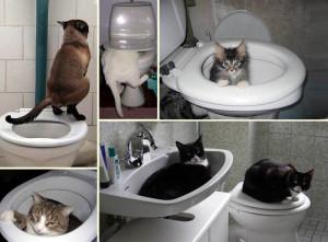 Способ приучить котенка к унитазу
