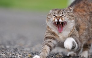 Что делать, если кошка проявляет агрессию