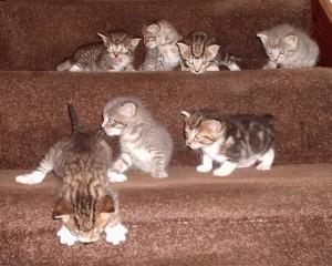 Как ухаживать за месячным котенком