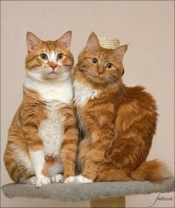 Клички кошек русские