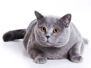 Кошки – самые распространенные домашние питомцы