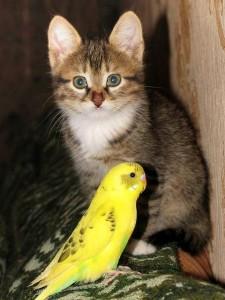 Кошки и попугаи
