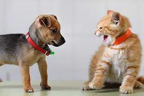 Кто умнее собака или кошка
