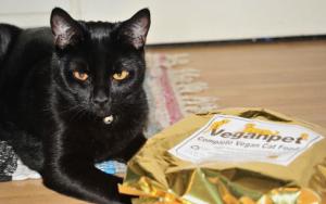 Можно ли кормить сырым мясом кошек