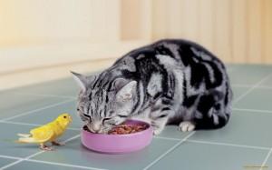 Почему же кошка обходит стороной миску с новой едой