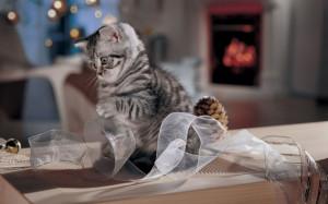 Во что играть с кошкой