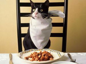 А правда ли, что кошек надо кормить рыбой и молоком