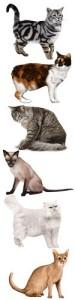 Инсульт у кошек