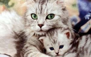 Воспитанием маленького котенка занимается прежде всего мать