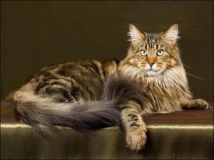 «Аборигенная порода кошек» - что это такое