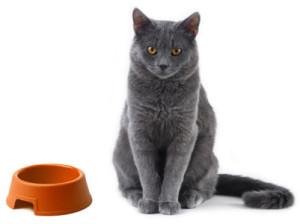 Как и чем кормить кошку