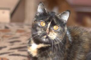 Как определить характер котенка по его окрасу