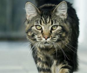 Как ухаживать за стареющей кошкой