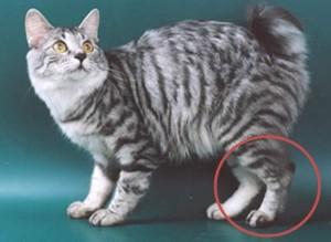 Кошка с курильской гряды