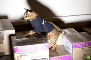 Кошки нашли работу