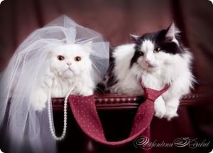 Кот или кошка. Кого выбрать