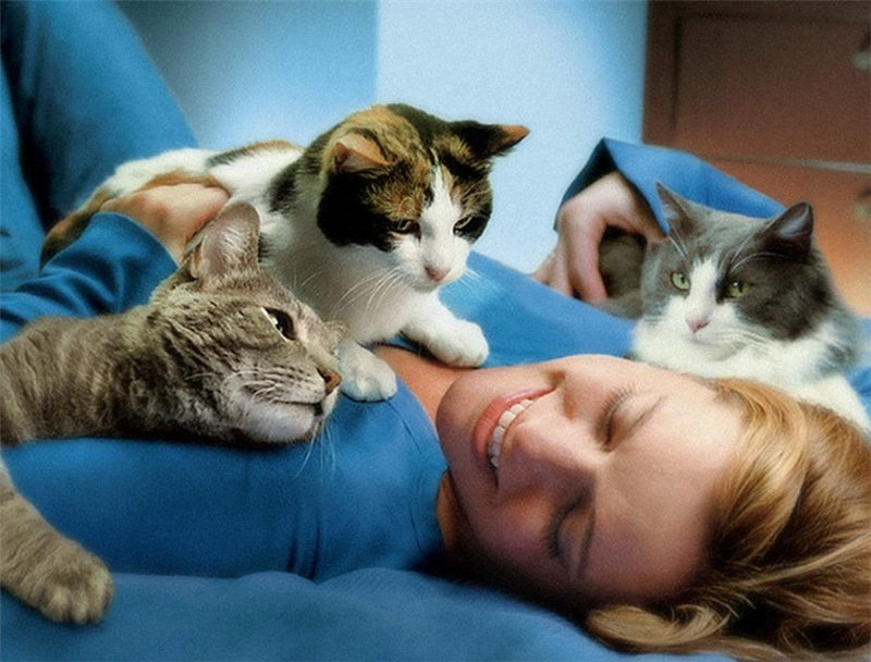 Что могут лечить кошки?