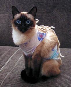 Нужно ли кастрировать или стерилизовать кошек
