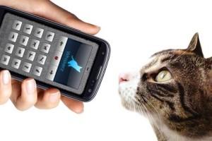 Переводчик с кошачьего языка