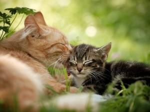 Самая нежная кошка