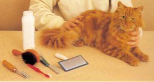 Уход за телом кошки, как правильно ухаживать за телом кошки