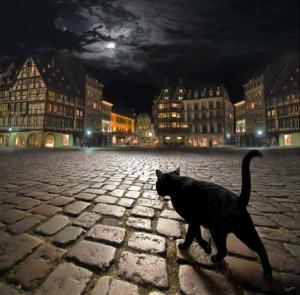 Уличные кошки — приручение бродяг