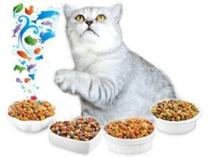 Выбираем корм для кошек