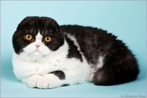 Выделения из глаз кошек