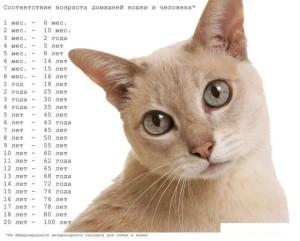 Взаимозависимость к кошке