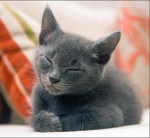 Звуки кошек