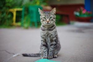 Ринотрахеит у кошек