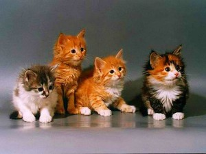 Сколько в среднем живут кошки