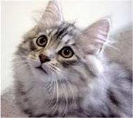 «Приданое» для котенка