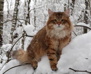 Что можно и что нельзя давать кошкам