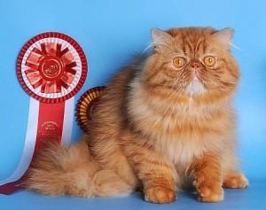 Кормление кастрированных котов