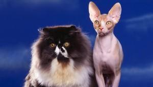 Благоприятные породы кошек для семейной пары