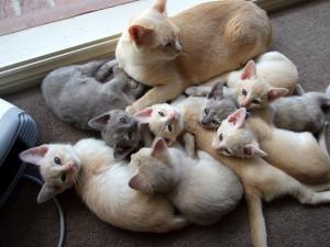 Если у кошки появились котята