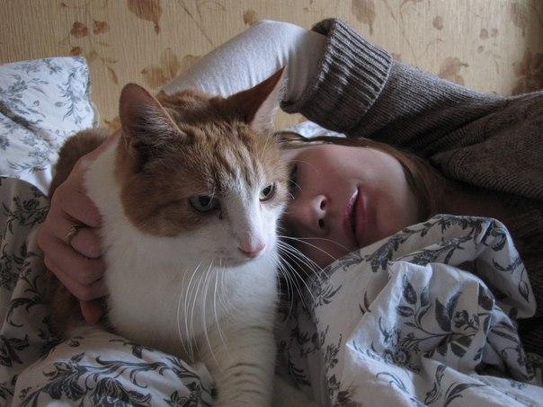 Фото Сонник кот и собака
