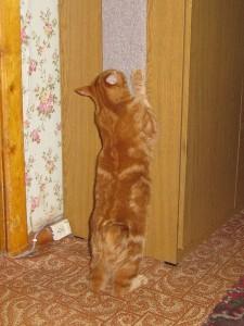 Как отучить кота или кошку драть мебель